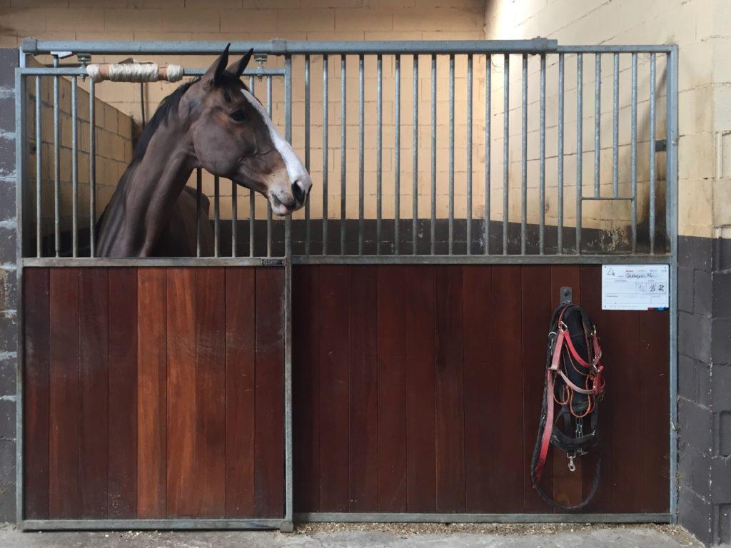 caballo en una cuadra de pupilajes en centro ecuestre la Croupe Santiago de Compostela