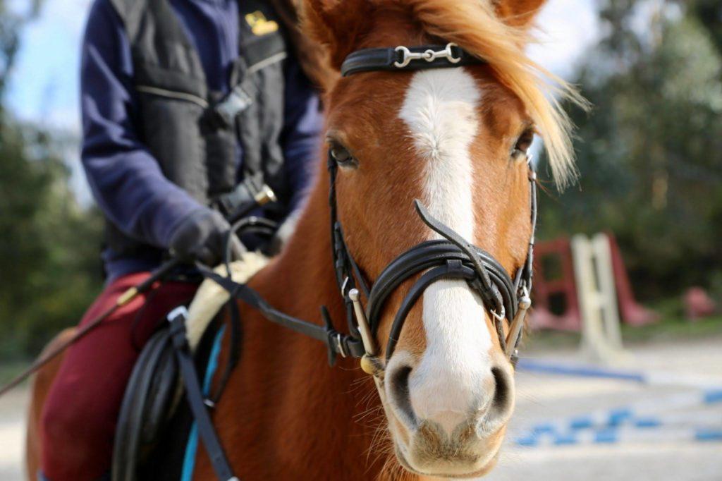 caballo en clases de equitacion en LaCroupe. Niña montando a caballo en Santiago de Compostela