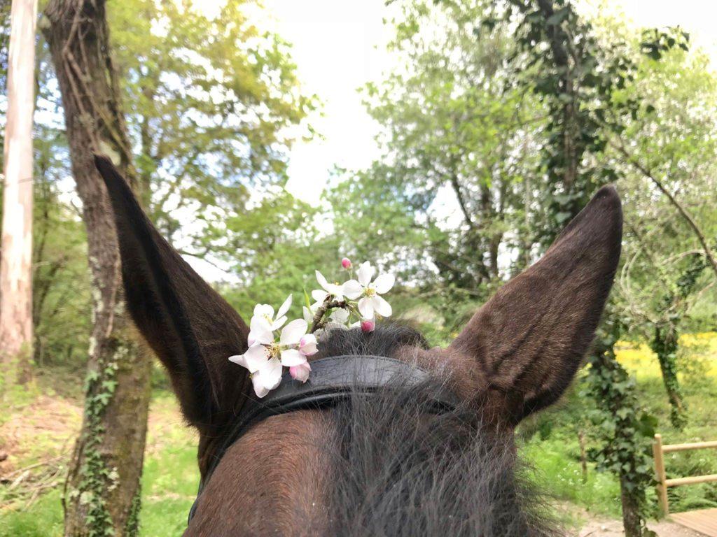 caballo en un entorno verde con flores y bosque